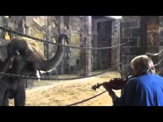 Video: Elephants sway in unison to live classical music in zoo.  Awww so beautiful and sweet..