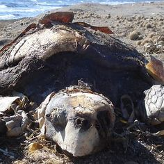 The Tunisian Chemical Group Ecocide In Gabes (tunisia)