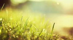 summer sunshine widescreen - Hľadať v Google