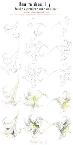 Draw a Lily