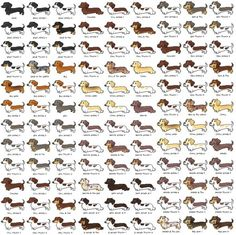 so many and I want one of each please #dachshund #doxie