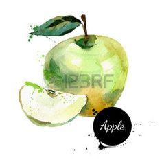 aquarelle: Main peinture à l'aquarelle tiré sur fond blanc. Vector illustration de fruits pomme