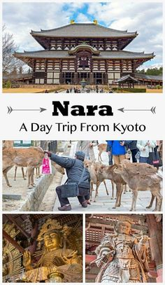 A Nara day trip is perfect for those staying in Kyoto. Explore Nara Park and meet sacred deer before exploring the largest wooden structuring the world. Nara, Kyoto Japan, Tokyo Japan, Japan Trip, Okinawa Japan, Japan Travel Guide, Asia Travel, Travel Tourism, Japan Guide
