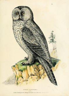 v. 2 - Fauna boreali-americana, or, The zoology of the northern parts of British America : - Biodiversity Heritage Library