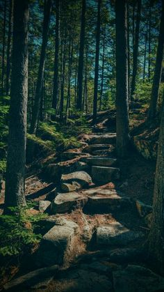 Beautiful Places, Mountains, Amazing, Nature, Forests, Travel, Woods, Voyage, Woodland Forest