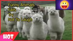 Funny Animals Fails 11   Try Not To Laugh Challenge   Compilation Vines