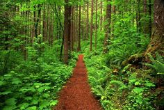 Forest Trail, Columbia River Gorge, OR | US SCENICS