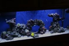 Aquascaping, Show your Skills... - Page 5 - Reef Central Online Community