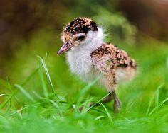Cute chick - http://www.1pic4u.com/blog/2014/09/09/cute-chick/