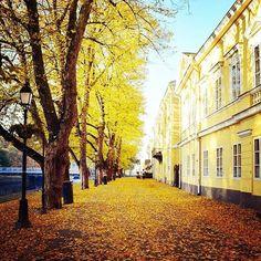 #sweet #hometown #turku #finland #åbo #riverside #morningglory #autumn #autumncolors #yellow #fallenleaves #october #varförparisviharjuåbo… Finland, Instagram, Europe, Cities