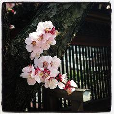 suppaiku:    #Yushima #tokyo #japan #japon