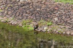 Projeto 365 Inspirações - FOTO 33  #365inspiracoes #reflexo #reflection #passaro #bird