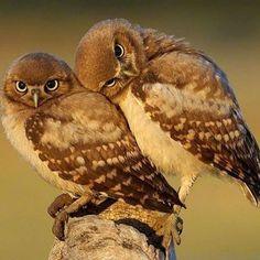 Funny Birds, Cute Birds, Cute Owl, Pretty Birds, Beautiful Birds, Animals Beautiful, Small Birds, Birds Pics, Beautiful Couple