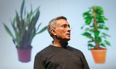 TED Talk: How to grow fresh air. Researcher Kamal Meattle shows how an arrangement of three common houseplants, used in specific spots in a home or office building, can result in measurably cleaner indoor air. Mother In Law Tongue, Money Plant, Bedroom Plants, Air Pollution, Landscaping Plants, Grow Your Own, Ted Talks, Go Green, Houseplants