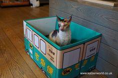 Cat Travel: Neko no Jikan Amemura – Osaka Cat Cafe Part 5 find this fantastic photo from Katzenworld