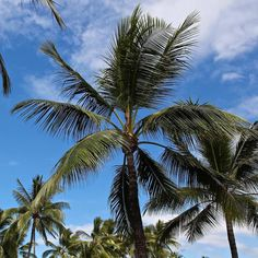 Palm trees & sundowners... Perfect! Come on down to BARBADOS for that cool drink. We look forward to seeing you soon. #barbadosportdouglas #barbados #bar #palmtree #palmtrees #paradise #sunshine #sunset #alcohol #cocktails #wine #portdouglas #paradise #fnq #australia #friends #family #fun #relax #design #details #travel #smile by barbadosportdouglas