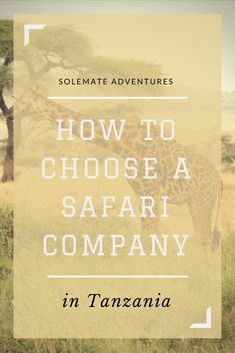 How to Choose A Safari Company in Tanzania If you are planning a safari in Tanzania, a quick Google search will surely leave you feeling overwhelmed. Researching and deciding on companies was very time-consuming so I'm sharing my top tips on how to book a safari to save you some time! Safari Tips