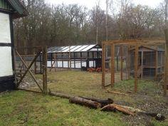 Haven mod hønsene februar 2015.