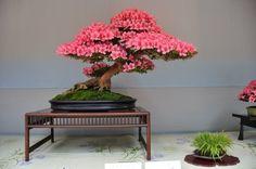 25 imágenes de impresionantes bonsáis e información detallada para conseguir nuestro preferido | Plantas