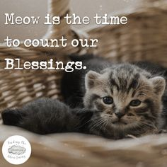 Meow is the time to count our Blessings. Gratitude Changes Everything, Gratitude Quotes, Positive Vibes, Counting, Blessings, Motivational Quotes, Blessed, Positivity, Funny