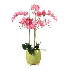 餐厅花 Vase, Plants, Home Decor, Decoration Home, Room Decor, Plant, Vases, Home Interior Design, Planets