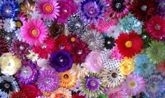 awesome 20 Wholesale Flower Hair Clips,