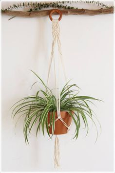 Large Macrame Plant Hanger with wooden ring by #fallandFOUND