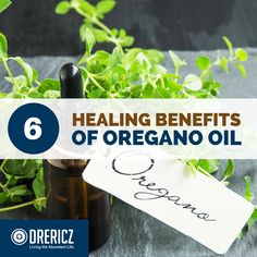 We'll learn about oregano essential oil production and composition, oregano oil benefits, its most valuable uses, and six ways you can benefit from them. Oregano Essential Oil, Doterra Essential Oils, Natural Essential Oils, Young Living Essential Oils, Essential Oil Blends, Herbs For Depression, Oregano Oil Benefits, Herbs For Anxiety, Healthy Herbs