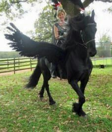 26 creatively costumed horses who are masters of disguise horse horse halloween costume solutioingenieria Gallery
