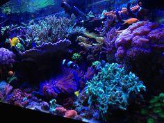 Stunning mixed reef tank #aquarium