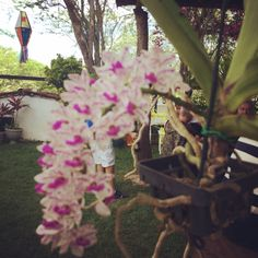 As orquídeas