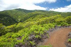 Kapalua Hiking Trail - for the adventurous hiker. Go Hiking, Hiking Trails, Kapalua Resort, West Maui, Maui Travel, Maui Hawaii, White Sand Beach, Travel And Leisure, Paths