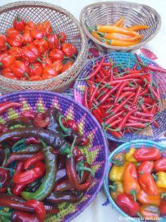 Renee's Garden World of Chiles 2