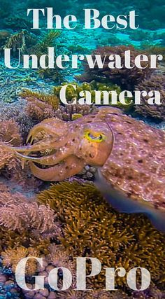 Simply the best underwater camera is the GoPro. After two full years of World travel with our GoPro, we have gone through the ringer of common mistakes.  These are generally very basic GoPro mistakes that every user does at least once while using this handy little camera on their adventures. Click to read the full travel blog post at  http://www.divergenttravelers.com/gopro-mistakes-adventure-travel/