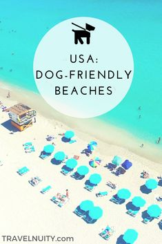 Dreaming of a dog-friendly beach vacation in the USA this summer? Check out this list of dog-friendly beaches, from Florida to Chicago to California! Road Trip With Dog, Road Trip Usa, Usa Roadtrip, Hiking Dogs, Dog List, Dog Beach, Labrador Retriever Dog, Dog Travel, Crazy Dog