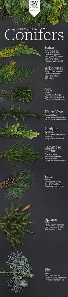 Conifers - Proven Winners
