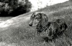 Scruffy Ponders the Meaning of Life by Jerry Lorengo