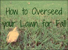 The fall is one of the best times to repair the lawn from summer damage and to encourage thicker growth of cool-season grasses.