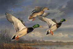 Mallards Rising - by Joe Hautman Wildlife Paintings, Wildlife Art, Art Canard, Acrilic Paintings, Duck Art, Hunting Art, Watercolor Bird, Bird Art, Beautiful Birds