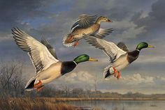 Mallards Rising -  by Joe Hautman