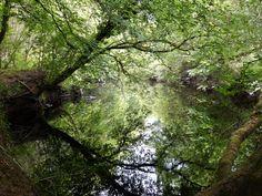 Co. Clare: Bleach River. Irish Landscape, Bleach, My Photos, Country Roads, River, Plants, Rivers, Plant, Planting