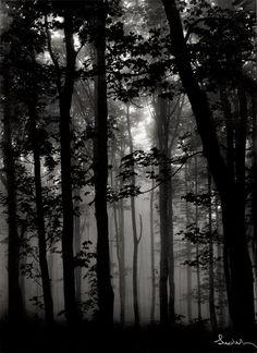 JosefSudek  Forest in fog; Prague. 1950s