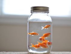 I like this idea, but maybe not that many in a jar and something pretty inside. Or Betta fish instead of goldfish