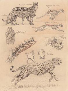 Scientific Illustration | theolduvaigorge: Sabertooth diaries 1: excavating...