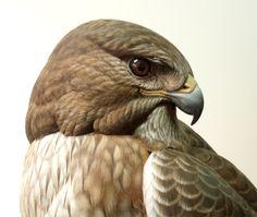 Red Tailed Hawk by Greg Pedersen Wood Sculpture, Sculptures, Merlin Bird, Most Beautiful Birds, Red Tailed Hawk, Small Paintings, Wildlife Art, Bird Art, Art Sketches
