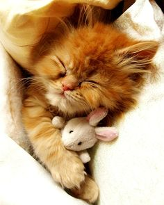 cute-kitten-hugging-toy-mouse