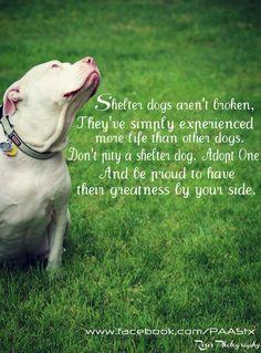 Shelter dogs aren't broken.....