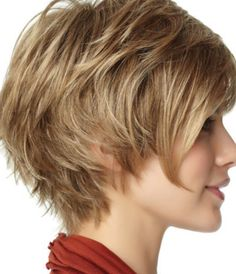 Image result for brown pixie bob