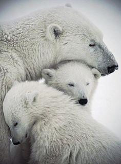 / polar bears / from my misty morning /