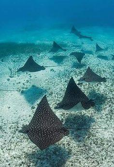 Gadgetflye.com - Bimini Wings!The Bahamas http://www.deepbluediving.org/best-scuba-diving-mask-reviews/